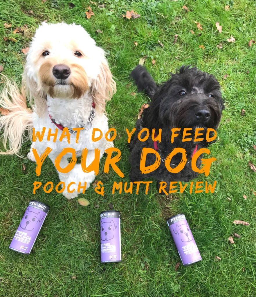 Pooch & Mutt Dog Food Review