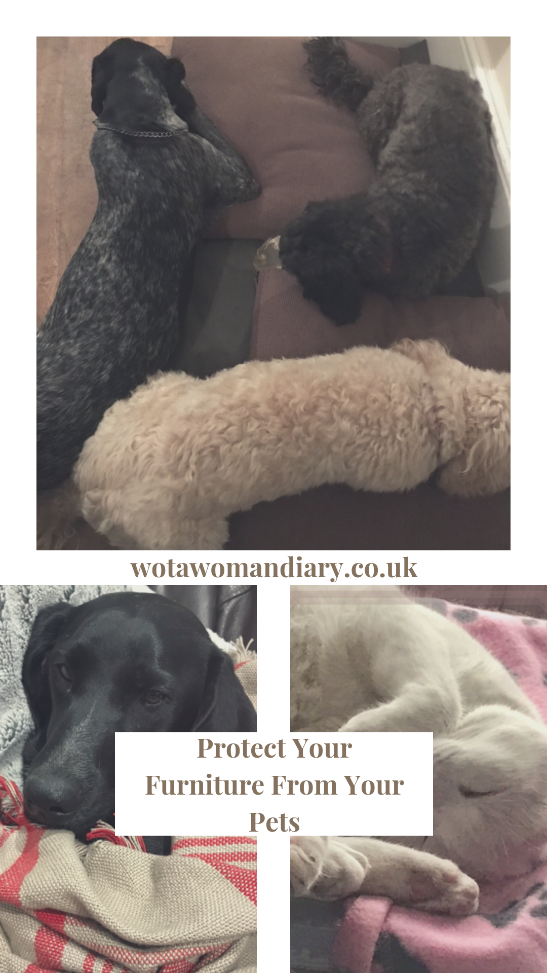 Protect Your Furniture From Your Pets text Image with dogs