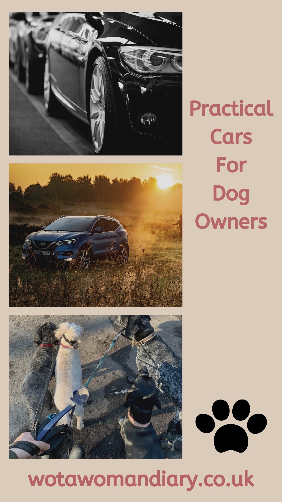 practical cars for dog owners