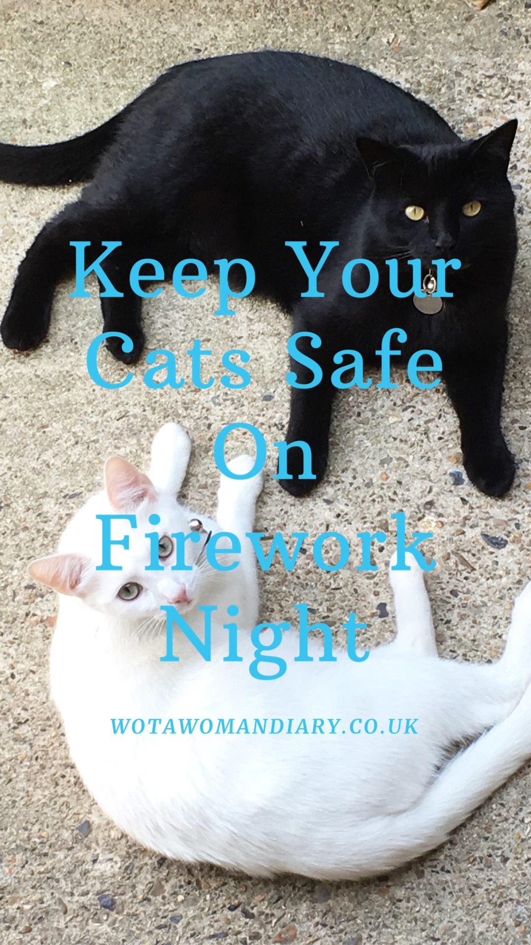 a black and white cat laying together keeping safe on firework night