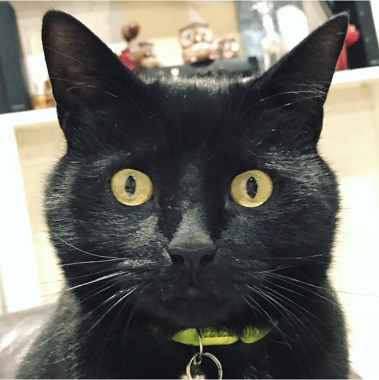 a black cat showing expression with his eyes on firework night